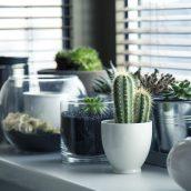 Fenster online kaufen – Vorzüge und Nachteile